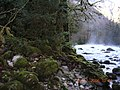Bzyb river. boxwood forest - panoramio.jpg