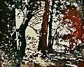 CAW-Holzschnitt-Joachim-Feldmeier-H0131.jpg