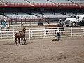 CFD Tie-down roping Cheyenne Harper -1.jpg