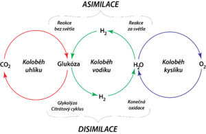 CHO-cycles cz.png