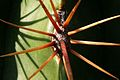 Cacti UK.jpg