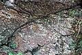 Cades Sandstone (Neoproterozoic; Laurel Creek Road roadcut, Great Smoky Mountains, Tennessee, USA) 2 (36249677833).jpg