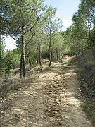 Camino de San Miguel 1.jpg