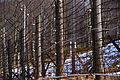 Camp de concentration de Natzwiller-Struthof 06.jpg
