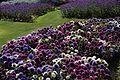Cannon Hall gardens (9608690148).jpg