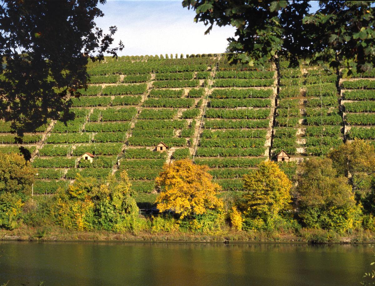 Steillagenweinbau wikipedia for Terrassenanlagen bilder