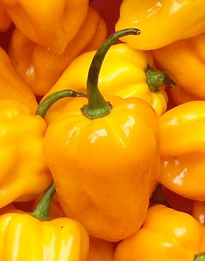 Hainan yellow lantern chili - Image: Capsicum chinense Hainan Yellow Lantern Chili 04