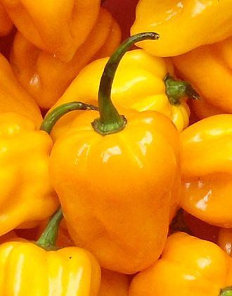 Hainan yellow lantern chili - Image: Capsicum chinense Hainan Yellow Lantern Chili 04