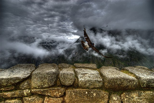Caracara takes off at Machu Picchu.jpg