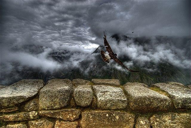 Caracara takes off at Machu Picchu.jpg