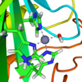 Carbonic anhydrase 1CA2 active site.png