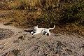 Cat241, citizen of Monsanto (24248596218).jpg