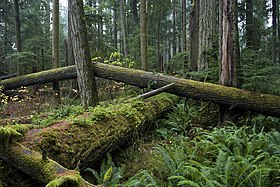 Cathedral Grove 2006.jpg