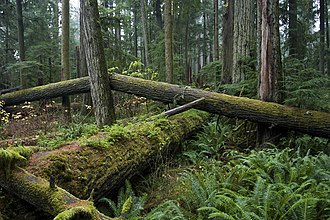 MacMillan Provincial Park - Cathedral Grove in 2006