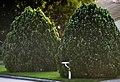 Cedars in Early Morning (4616690483).jpg