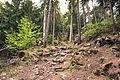 Charvensod - trail.jpg