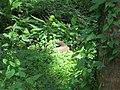 ChemancheryIMG 0795.jpg