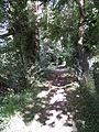 Chemin du Roy.JPG