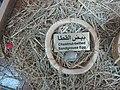 Chest-nut Bellied Sandgrouse egg.JPG