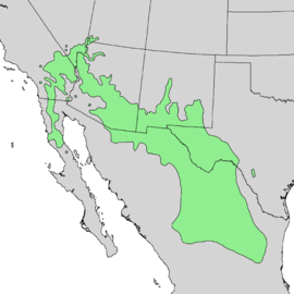 Chilopsis linearis range map 3.png