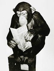 Chimp reading SAS brochure