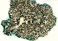 Cladonia strepsilis-1.jpg