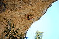 Climbing a roof.jpg