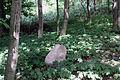 Cmentarz Rzepowo 3.jpg