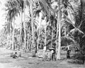 Coconut plantation Wellcome M0002735.jpg