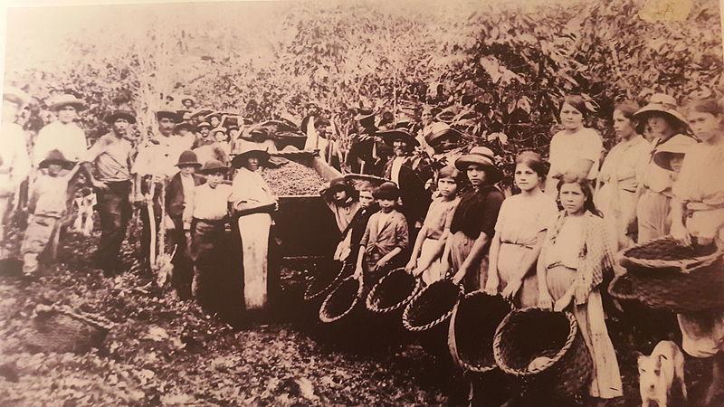 Archivo:Cogedores de café. Costa Rica.jpg
