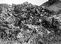 Collectie Nationaal Museum van Wereldculturen TM-10021345 Rotsvegetatie op Saba Saba -Nederlandse Antillen fotograaf niet bekend.jpg
