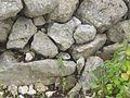 Comadreja en un Muro de Piedra.jpg