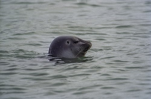 500px common seal (js) 7
