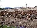 Commonburn Plantation - geograph.org.uk - 1533363.jpg