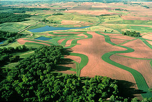 English: View of contour buffer strips on farm...