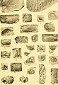 Contribution à la carte géologique de l'Indo-Chine. Paléontologie (1908) (20497477050).jpg