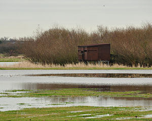 Coombe Hill Canal - Bird hide at Coombe Hill nature reserve
