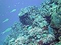 Coral Scene 20 (7342857520).jpg