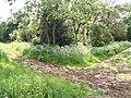Corner of Rosamond's Bower - geograph.org.uk - 453140.jpg