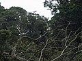 CostaRica (6108277735).jpg