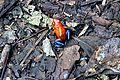 Costa Rica - Sarapiqui 07.jpg