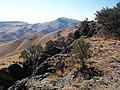 Cotterel - panoramio (2).jpg