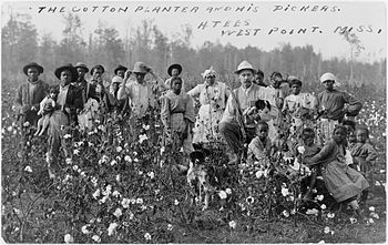 US Slave: Slave Grown Cotton in a Global Economy ...  Cotton Plantations 1800s