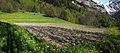 Courmayeur - field.jpg