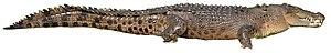 Crocodylus - 80 px