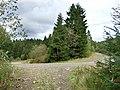 Crynant Forestry Walk - geograph.org.uk - 963846.jpg