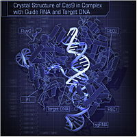 Crystal Structure of Cas9 in Complex with Guide RNA and Target DNA.jpg