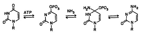 Ctp synthase mechanism: UTP + ATP + glutamine ⇔ CTP + ADP + glutamate