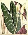 Curtis's botanical magazine (8271546969).jpg