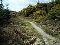 Cycle Trail in Dalbeattie Forest - geograph.org.uk - 392751.jpg